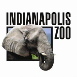 indy-zoo